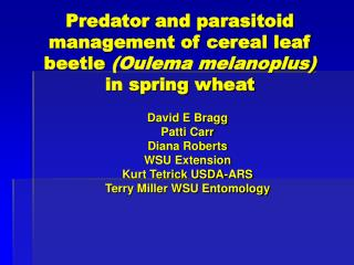 Predator and parasitoid management of cereal leaf beetle  (Oulema melanoplus)  in spring wheat