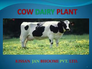 COW DAIRY PLANT