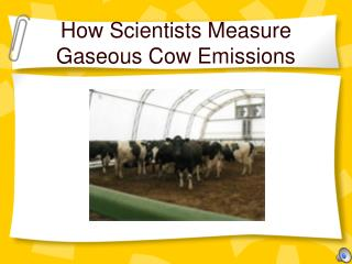 How Scientists Measure Gaseous Cow Emissions