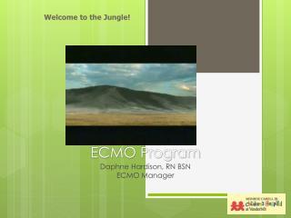 ECMO Program