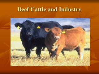 Beef Cattle and Industry