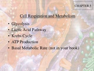 Cell Respiration and Metabolism
