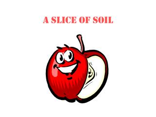 A Slice of Soil