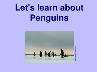 Let's learn about Penguins