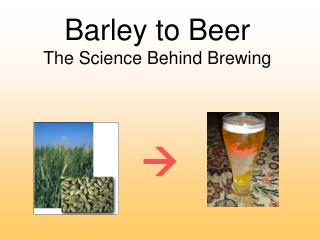 Barley to Beer The Science Behind Brewing