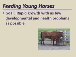 Feeding Young Horses
