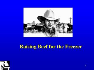 Raising Beef for the Freezer