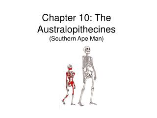 Chapter 10: The Australopithecines (Southern Ape Man)