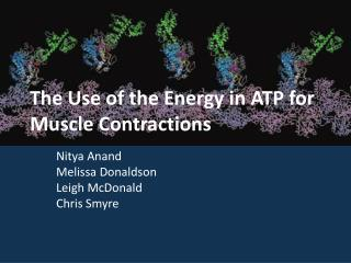 The Use of the Energy in ATP for Muscle Contractions