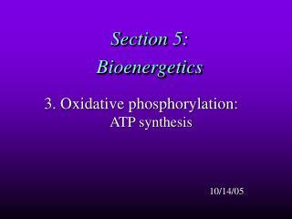 Section 5:  Bioenergetics
