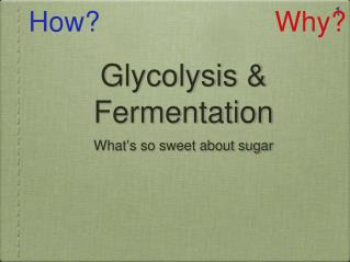 Glycolysis & Fermentation
