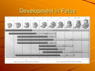 Development in Fetus