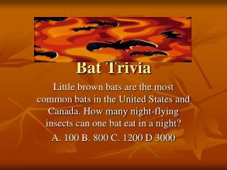 Bat Trivia
