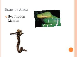 Diary of A boa
