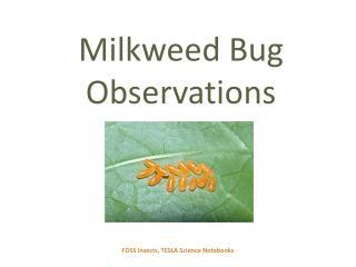Milkweed Bug  Observations