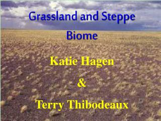 Grassland and Steppe Biome