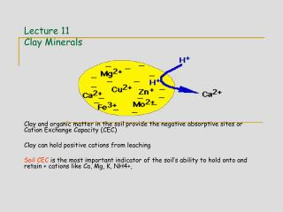 Lecture 11 Clay Minerals
