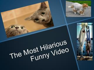 The most hilarious funny video