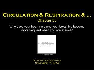 Circulation & Respiration & � Chapter 30
