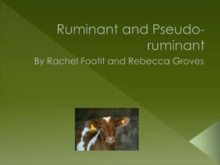 Ruminant and Pseudo- ruminant