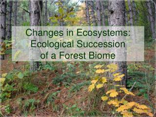 Changes in Ecosystems: Ecological Succession of a Forest Biome