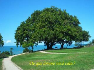 De que árvore você caiu ?