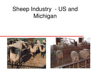 Sheep Industry  - US and Michigan