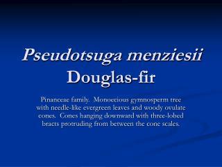 Pseudotsuga menziesii Douglas-fir