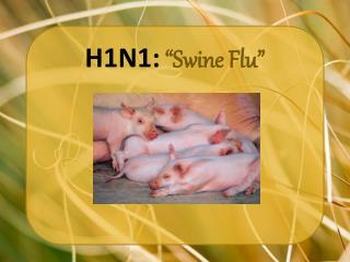 """H1N1: """"Swine Flu"""""""