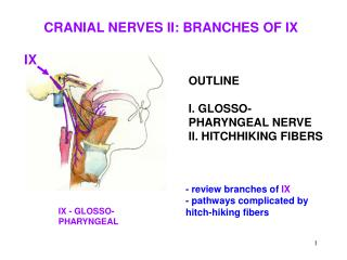 OUTLINE I. GLOSSO-PHARYNGEAL NERVE II. HITCHHIKING FIBERS