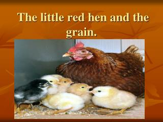 The little red hen and the grain.