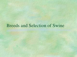 Breeds and Selection of Swine