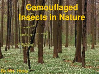 Camouflaged Insects in Nature