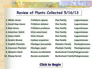 Review of Plants Collected 5/16/13
