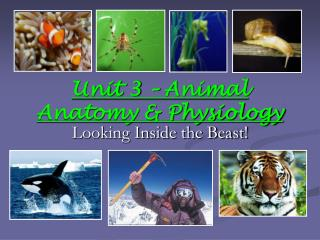 Unit 3 – Animal Anatomy & Physiology