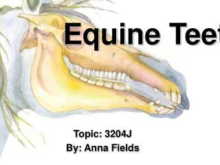 Equine Teeth