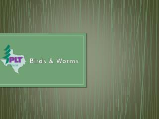 Birds & Worms