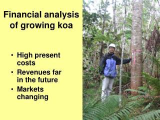 Financial analysis of growing koa