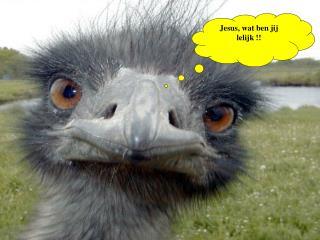 Jesus, wat ben jij lelijk !!
