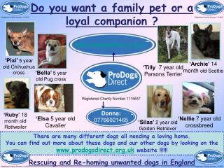Do you want a family pet or a loyal companion ?