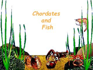 Chordates and  Fish