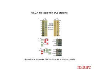 L Pauwels  et al. Nature 464 , 788-791 (2010) doi:10.1038/nature08854