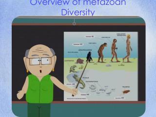 Overview of metazoan Diversity