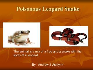 Poisonous Leopard Snake