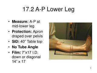 17.2 A-P Lower Leg