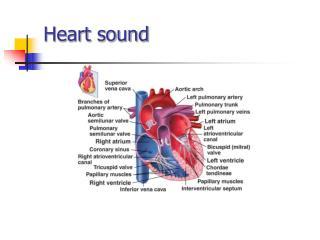 Heart sound