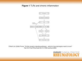 Figure 1  TLRs and chronic inflammation
