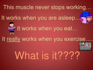 This muscle never stops working… It works when you are asleep…         It works when you eat…