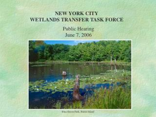 NEW YORK CITY WETLANDS TRANSFER TASK FORCE
