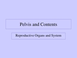 Pelvis and Contents